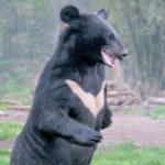 熊などの害獣対策を考える
